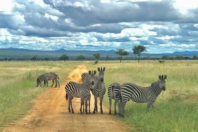 3 Days Safari at Mikumi National Park Southern circuit of Tanzania