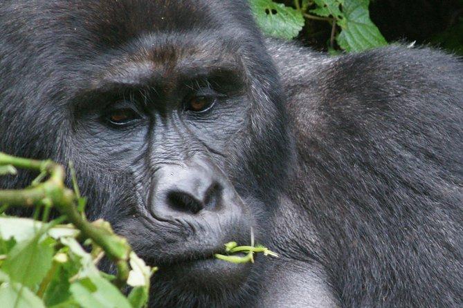 6 Days Uganda Gorilla, Wildlife and Chimpanzee Safari
