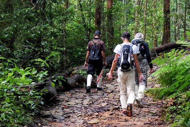 Private Day Tour: Sinharaja Rainforest Bird Hike Tour photo 4