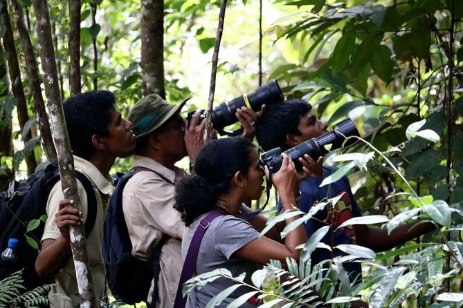 Private Day Tour: Sinharaja Rainforest Bird Hike Tour photo 2