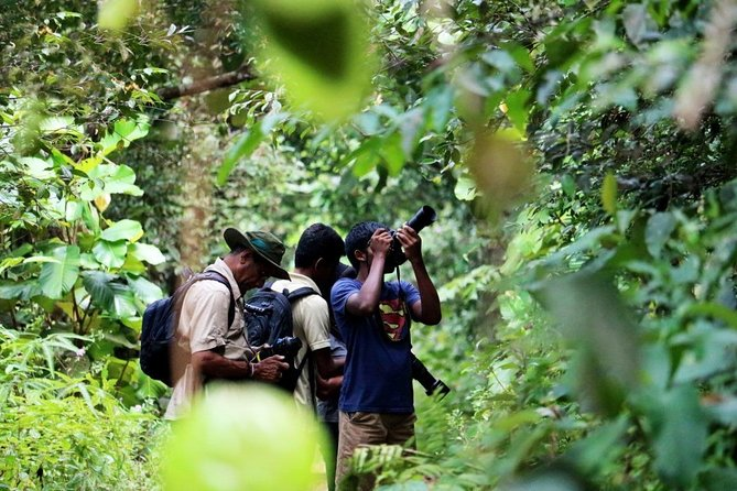 Private Day Tour: Sinharaja Rainforest Bird Hike Tour photo 7