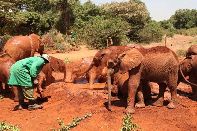Elephant Orphange & Giraffe Center Half Day