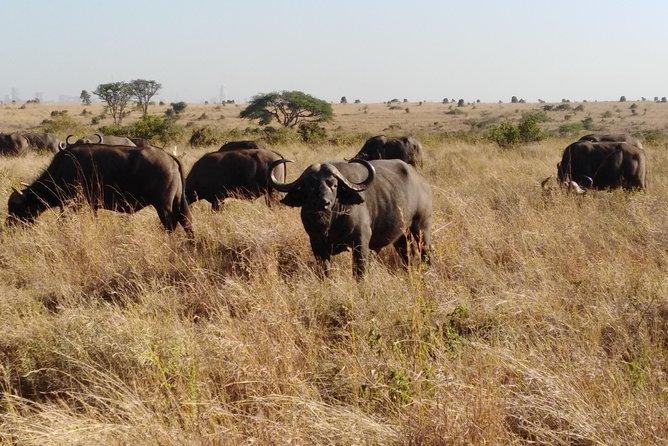 Nairobi day excursion