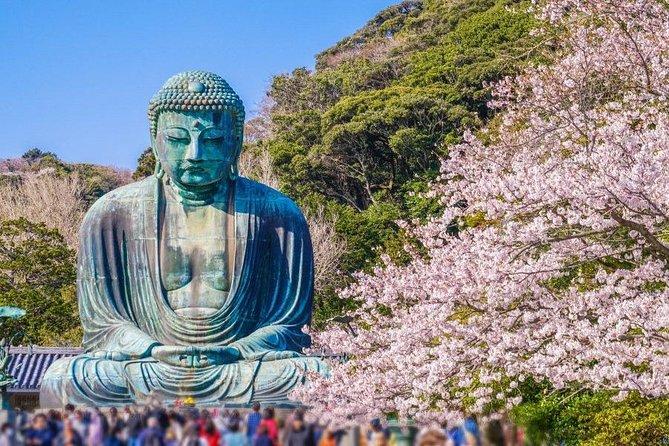 Cherry Blossom Viewing at Kamakura`s Great Buddha, Odawara Castle & Ninja Bus!