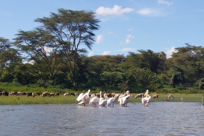Lake Naivasha, Nakuru Day Excursion
