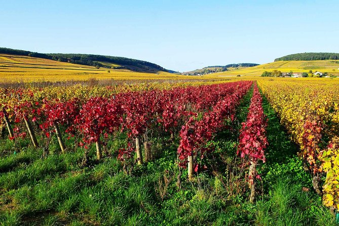 Beaujolais Wine Route Small-Group Tour with Tasting from Lyon