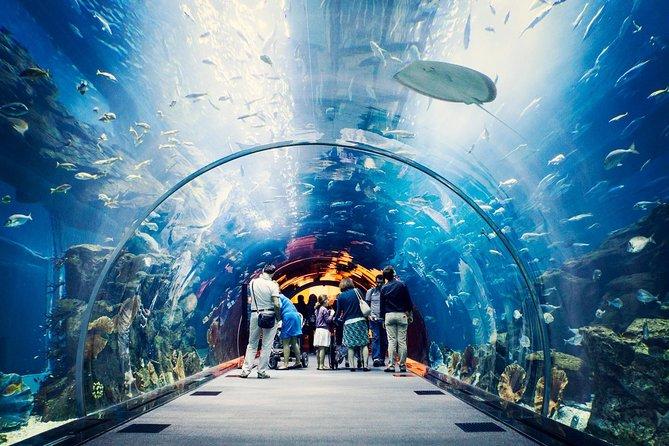 Dubai Aquarium and Underwater Zoo Admission Tickets