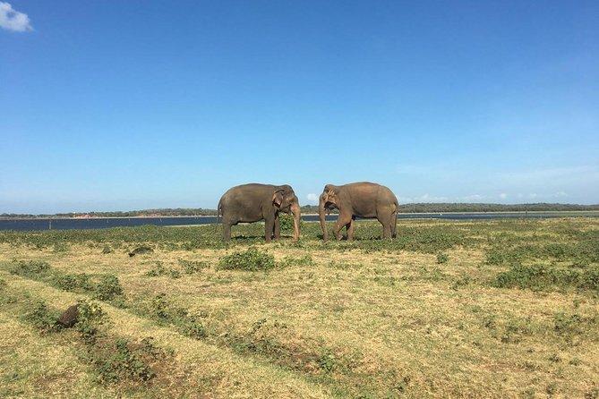 Hurulu Eco Park private jeep safari
