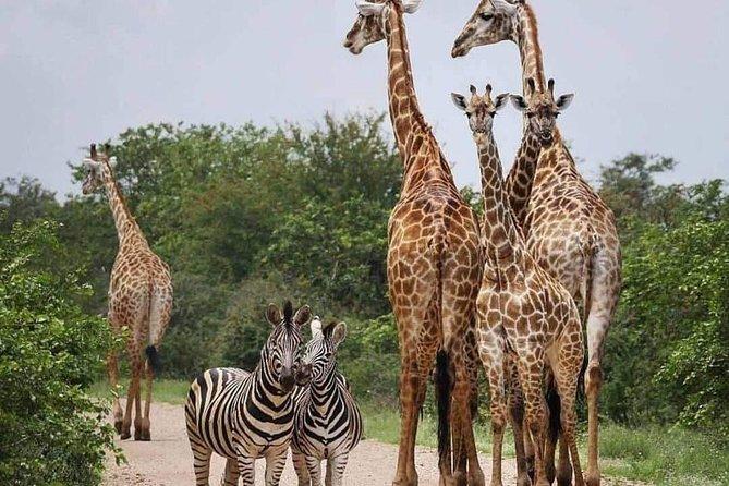 5 Days Joining Safari Tour Tanzania