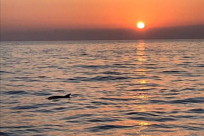 Sunset and dolphin excursion Pula - Ulika photo 6