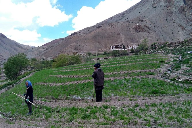 Farmstay – Farming in Ladakh