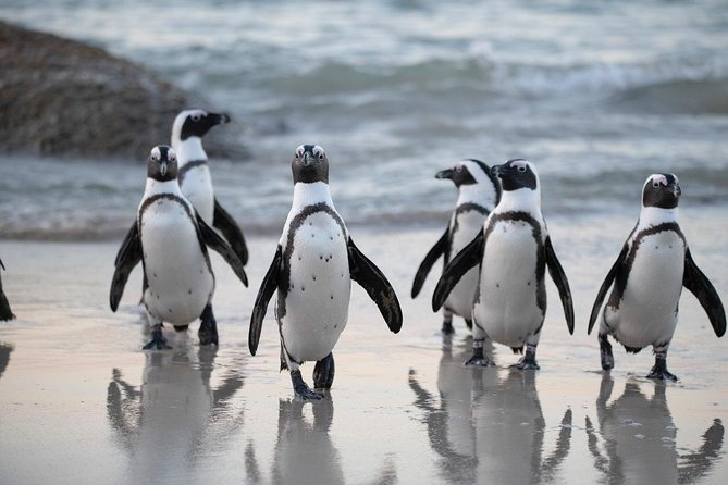 Cape of Good Hope Half Day Shared Tour with Boulder's Penguins Colony