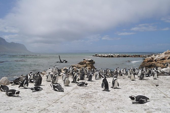 Cape of Good Hope Sightseeing and Penguins Full Day Tour From Cape Town photo 26