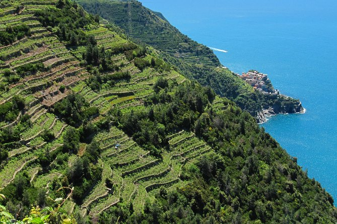 Cinque Terre Full Day Hike Experience