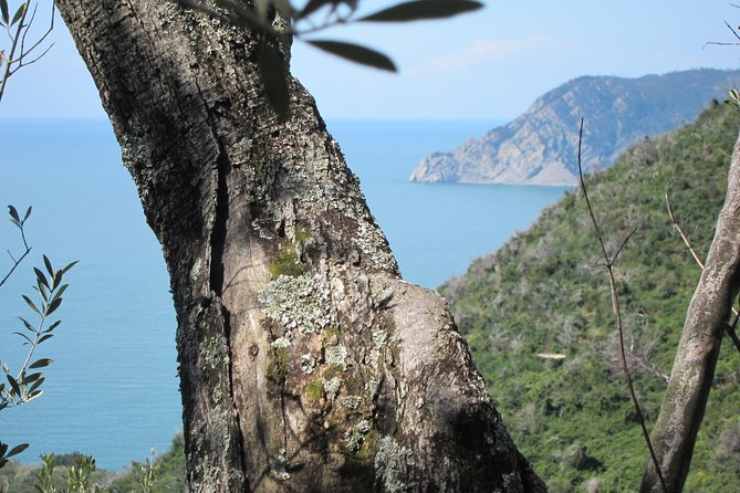 Hike from Levanto to Monterosso (Cinque Terre)