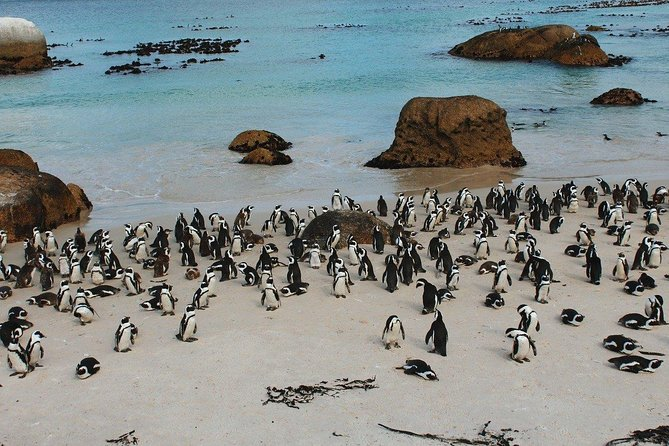 Cape of Good Hope Sightseeing and Penguins Full Day Tour From Cape Town photo 15
