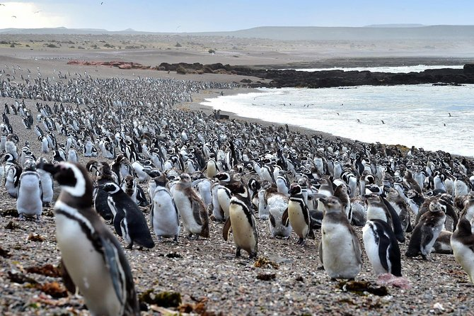 Puerto Madryn day tour with air, penguin, lunch and museum in private