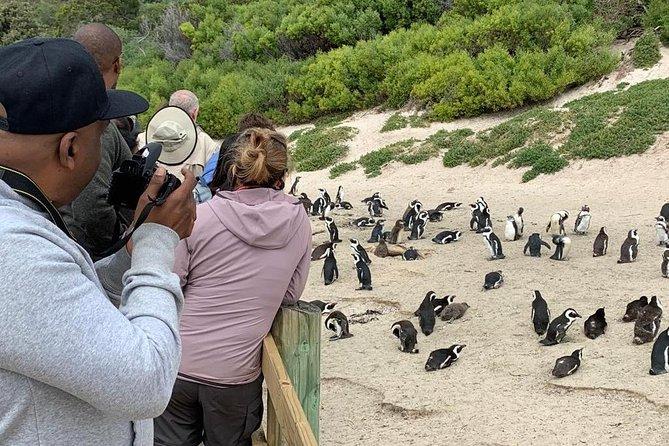 Boulder's Beach Penguin Colony.