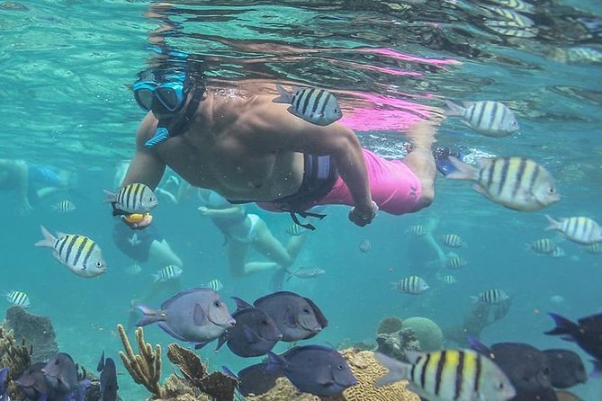 Coba and Snorkel