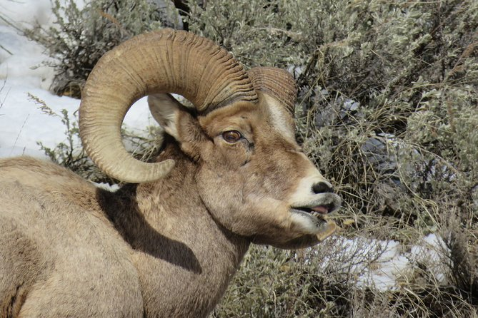 Grand Teton Park & Jackson Hole - PRIVATE Morning Wildlife Tour