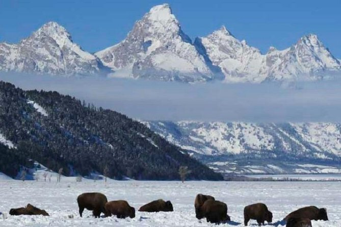Jackson Hole & Grand Teton Park - Half-Day Wildlife Tour - Afternoon