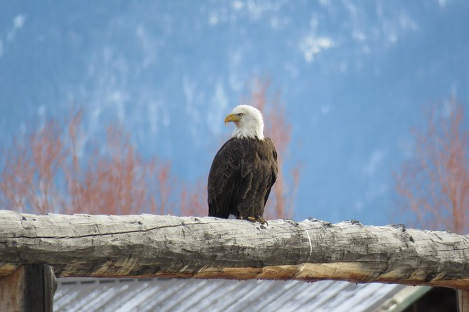 Grand Teton Park & Jackson Hole - PRIVATE Full-Day Wildlife Tour
