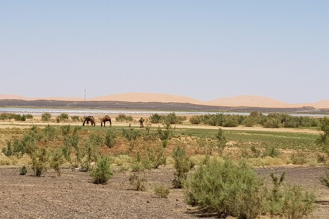 buggy raid in Morocco off the beaten track