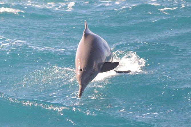 Over Night Swim with Dolphin in Sataya Reef Sea Trip - Marsa Alam