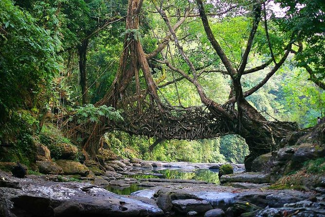 6-Days Mesmerizing Meghalaya tour photo 6