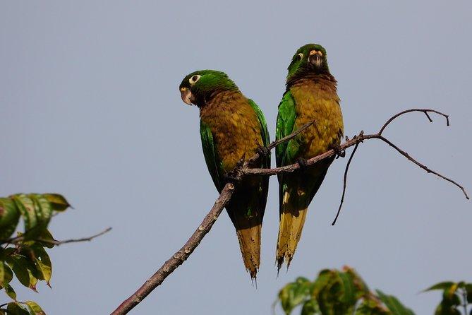 Aves del Mundo Maya 3