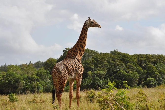 Shimba Hills National Reserve Day Tour from Mombasa/Diani Beach & surroundings photo 6