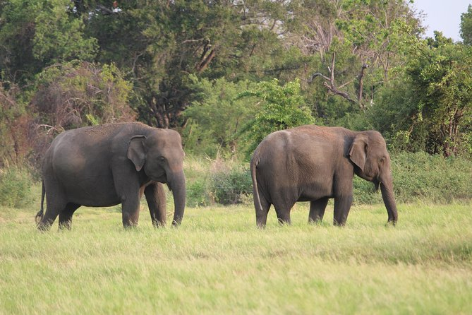 Minneriya National Park Private Safari