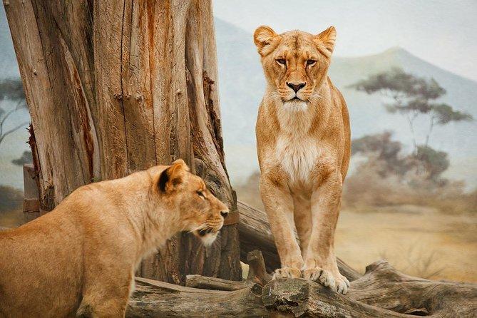 13 Days real African safari