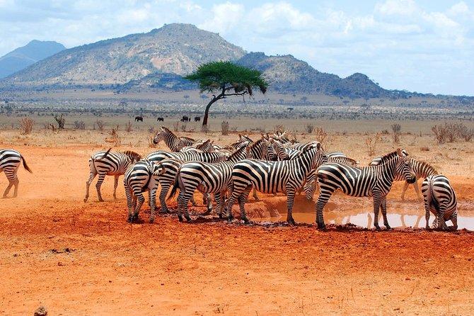 6 Days in Manyara, Serengeti & Ngorongoro ( Group)