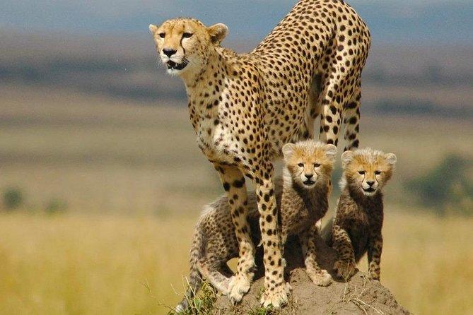 15 Days Explore Uganda Safari, Wildlife and Primates!