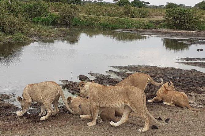 Best of Tanzania 5days 4nights safari