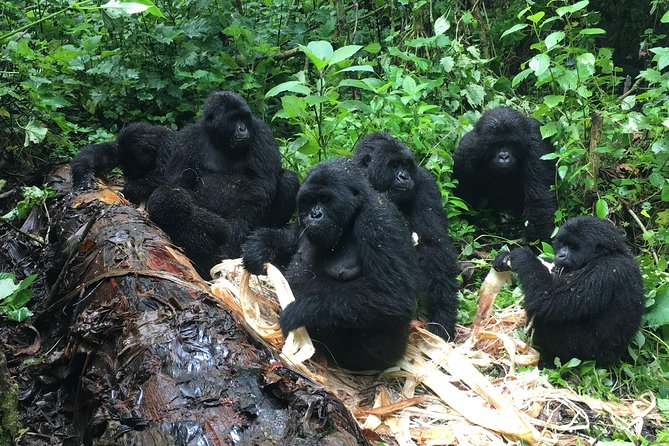 7 Days 2 times gorilla trekking and Nyiragongo hike in Virunga