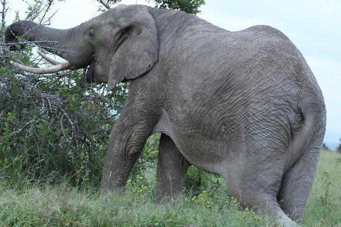 Private tour-Nairobi National Park,David Shedrick,Carnivore lunch&Giraffe centre