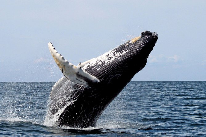 Platinum Whale Sightseeing and Cayo Levantado Island Tour