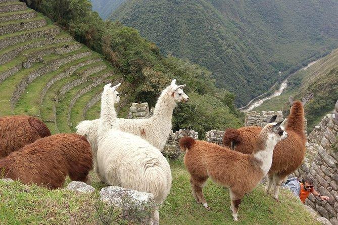 Inca Trail Trek to Machupicchu; Two-Day Trek
