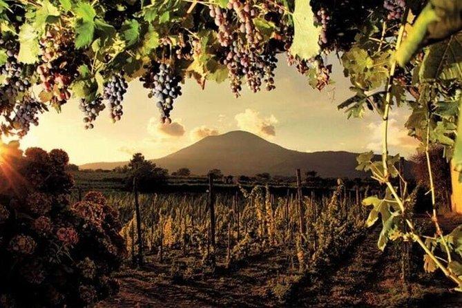 Pompeii with Wine Tasting