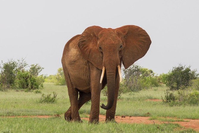 2 Days Tsavo East Safari from Mombasa