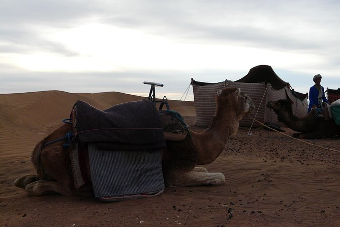 Two Day Desert Safari to Zagora from Marrakech including Camel Ride photo 1