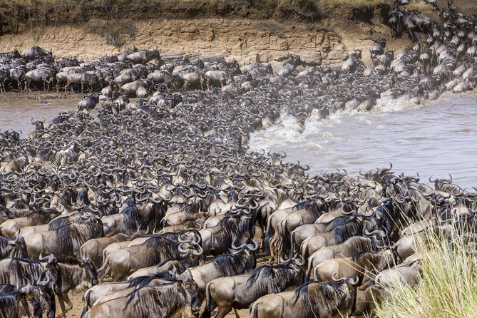 8 Day Tanzania Adventure Wildlife Safari