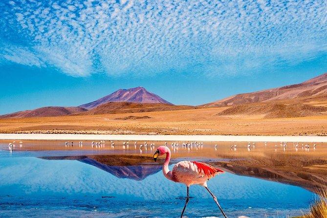 4 Days Atacama Altura: Moon Valley, Tatio Geysers & Altiplanic Lagoons