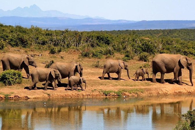 5-Day Garden Route Shared Tour from Cape Town including Addo National Park photo 24