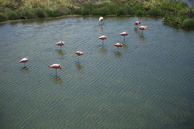 Wetlands Walking Tour in Isabela Island