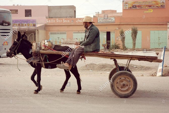 Donkey /horse ride with a traditional meal in a village at Luxor city photo 4