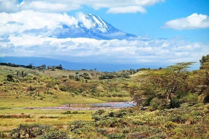 1 Day Kilimanjaro Hiking - Machame Route
