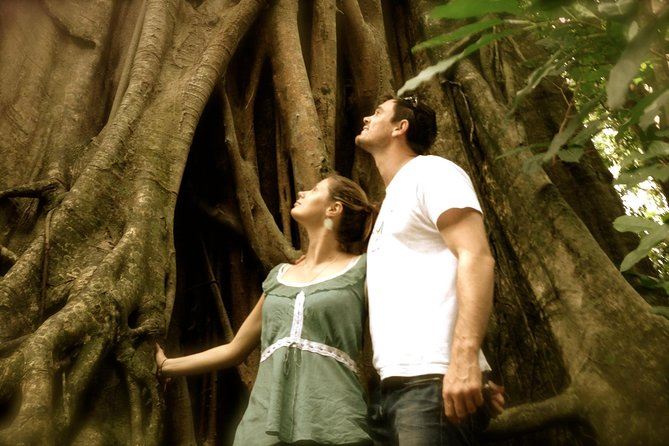 Daintree and Cape Tribulation Full Day Guided Tour